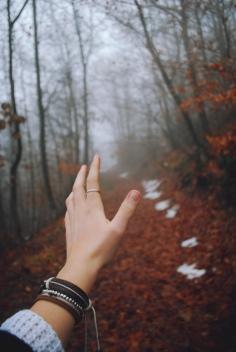 Il bosco segreto